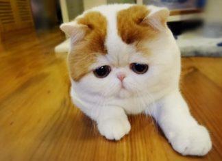 кот скучает